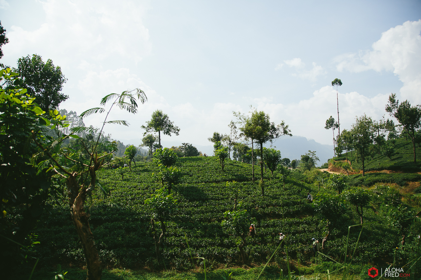 0067 - Sri Lanka - CP1A7258