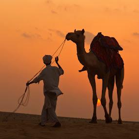 The Camel Herder at Thar... by Avishek Patra - People Street & Candids ( desert, sun set, sun rise, sand dune, rajasthan, dusk, camel, dawn, desert sunset, desert sunrise, camel herder, india, thar desert, , colorful, mood factory, vibrant, happiness, January, moods, emotions, inspiration )
