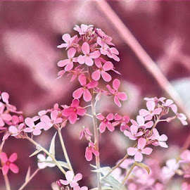 Powder Pink by Lisa Newberry - Digital Art Things