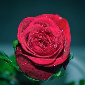 by Sambit Bandyopadhyay - Public Holidays Valentines Day (  )