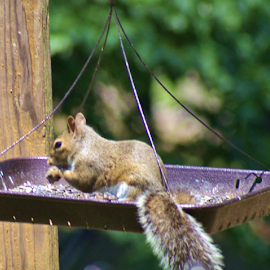 Hungry Squirrel by Terry Linton - Animals Other (  )