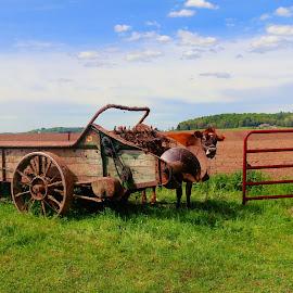 getting ready to plow by Jon Radtke - Landscapes Prairies, Meadows & Fields ( getting ready to plow )