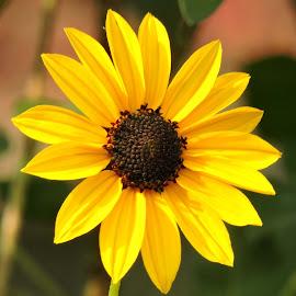 Yellow by SANGEETA MENA  - Flowers Flowers in the Wild (  )