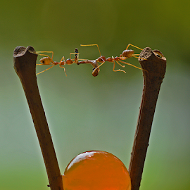 by Sigit Purnomo - Animals Insects & Spiders