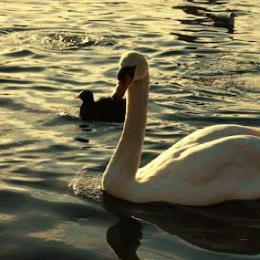 by Filio Starova - Animals Birds