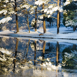 Winter in the South by Myra Brizendine Wilson - Landscapes Waterscapes ( aero snow, reflection, snow, trees, lake reflection, lake, reflection on water, snow on lake )