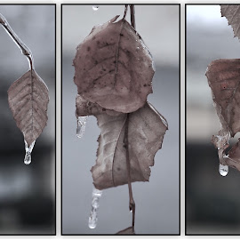 Ice triptych  by Margie Troyer - Digital Art Things