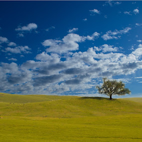 lonely oak by Rima Biswas - Landscapes Prairies, Meadows & Fields ( field, clouds, tree, california, meadow, landscape, spring )