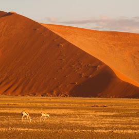 Dunes of Sossusvlei  by Chris Coetzee - Landscapes Travel ( sossusvlei, desert, springbok, africa, namibia,  )