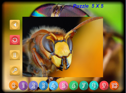 Puzzle Slider Macro Insects - screenshot