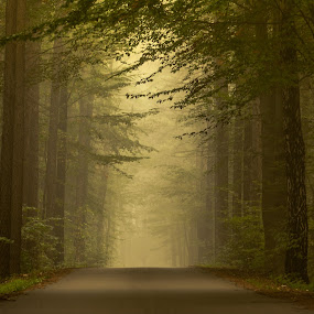 by Marek Biegalski - Landscapes Forests