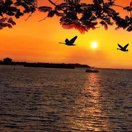 Evening Delight by Bhrajesh Raval - Landscapes Sunsets & Sunrises ( bird, sea, kerala, india, beach, beauty, evening )