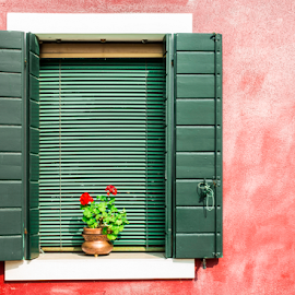 Venetian windows with flowers by Deyan Georgiev - Landscapes Travel ( plant, home, famous, old, europe, italian, exterior, colorful, bright, architecture, house, travel, beauty, pot, venetian, island, city, typical, ancient, colourful, style, mediterranean, flowers, italy, flower, balcony, building, green, burano, traditional, tourism, frame, red, vacation, facade, window, color, venice, architectural, antique, wall, floral, culture )