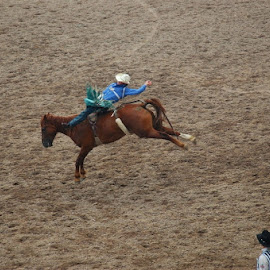 welcome to the rodeo by Harold Stoler - Animals Horses ( public events, horses, rodeo )
