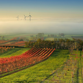 Wine Country in the mist by Matej Kováč - Landscapes Prairies, Meadows & Fields ( vineyard, landscape, fields, mist, garyfonglandscapes, holiday photo contest, photocontest,  )