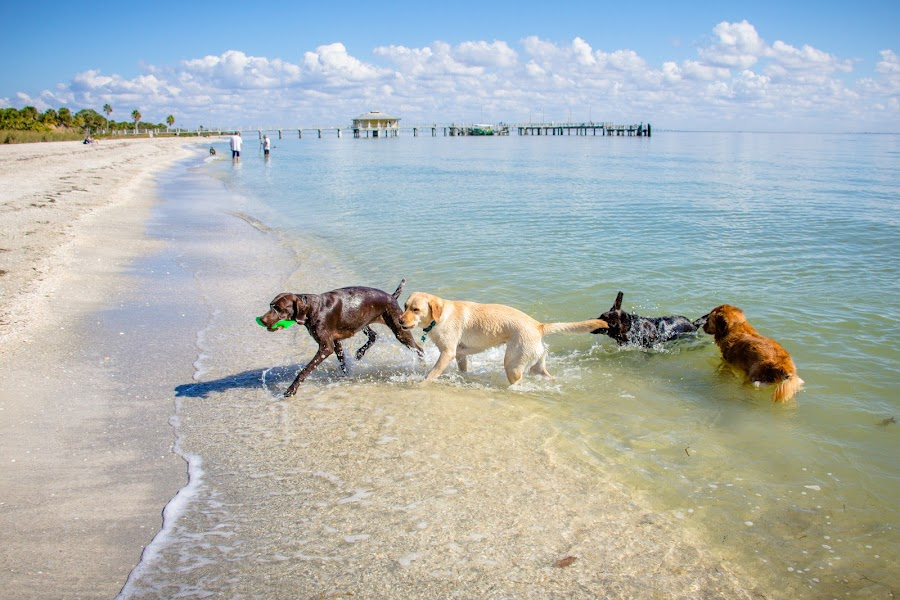 follow the leader by Meaghan Browning - Animals - Dogs Playing