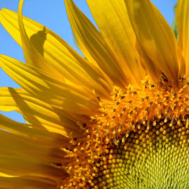 Let the sun shine in by Bridget Wegrzyn - Nature Up Close Gardens & Produce (  )