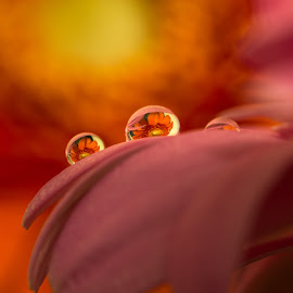 by Bojan Bilas - Abstract Macro