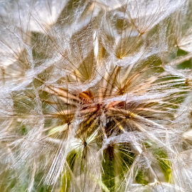 Seeds by Keith Sutherland - Nature Up Close Leaves & Grasses