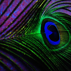 Peacock R4S by Ritwick Srivastava - Artistic Objects Other Objects ( pattern, blue, green, texture, feather, peacock )