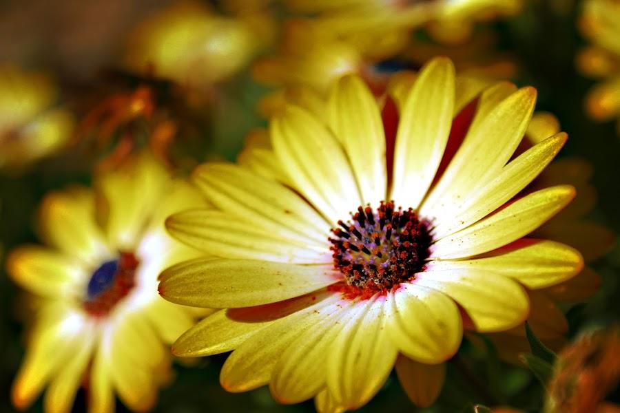 Shine by Rui Gonçalves - Nature Up Close Flowers - 2011-2013 ( jardim, polen, color, flowers, garden )
