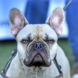 by Becs Becs - Animals - Dogs Portraits ( dog )