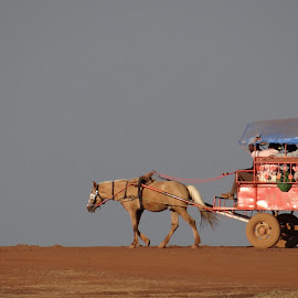 On the red dusty path.. by Saumy Nagayach - Novices Only Objects & Still Life ( red, carriage, dust, vehicle, horse, road )