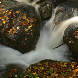 Wild by Marco Bertamé - Nature Up Close Water ( wild, autumn, flowing, fall, long exposure, rock, leaves, milky )