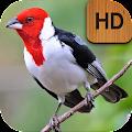 App Cantos do Cardeal HD APK for Kindle
