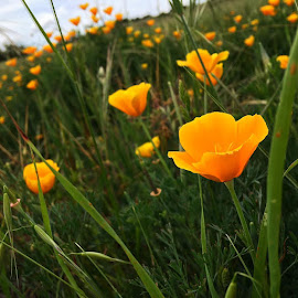 by Cydney Rothblatt - Uncategorized All Uncategorized ( field, flowers, flower,  )