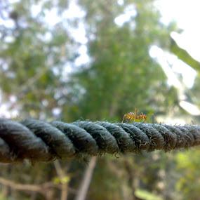 walk through... by Amal Vs - Nature Up Close Gardens & Produce ( walking, rope, path, bridge, ant, alone )