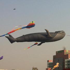Kite by Vivek Naik - Sports & Fitness Other Sports