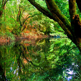 Old creek. by Tyhe Reading - Landscapes Waterscapes ( water, reflection, green, creek, pentax, trees )