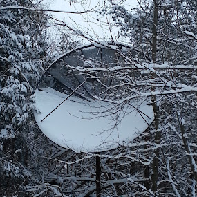 PennsylTucky State Flower by Laurel Rowe - Instagram & Mobile Android ( winter, satellite dish, snow, forest, woods, flower )