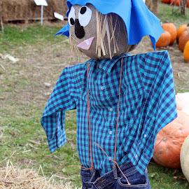 Goofy by Lenora Popa - Public Holidays Halloween ( holiday, scarrecrow, fall, harvest, halloween )