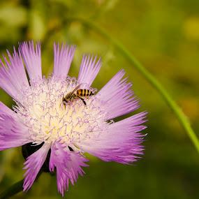 by Shambhunath Sadhu - Flowers Single Flower