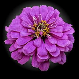 CPI flower 04 by Michael Moore - Flowers Single Flower