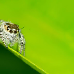 spider by Aravindh Ganesh - Animals Insects & Spiders