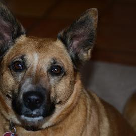 Cuddlz Portrait by Mel Bishow - Animals - Dogs Portraits