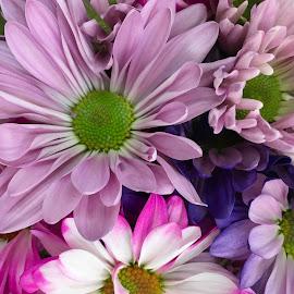 Purple Day by Joyce Thomas - Flowers Flower Arangements ( purple flowers )