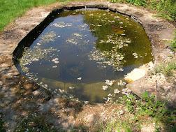 Photo 1 / 1 - Ifold Garden Pond