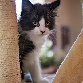 Our foster fail by Brook Kornegay - Animals - Cats Kittens