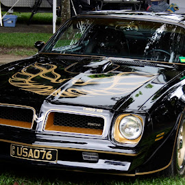 Nobbys' Trans Am by Trevor Smart - Transportation Automobiles ( australia., cairns, qld, trans am, robert )