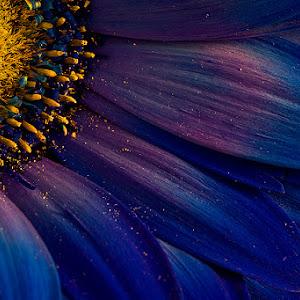 Blue-Rays.jpg