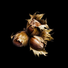 Hazelnuts by Opreanu Roberto Sorin - Food & Drink Fruits & Vegetables ( raw, shell, nutshell, hazelnuts, seasonal, one, hazelnut, leaves, macro, nature, tree, fresh, autumn, protein, vegetarian, ingredient, closeup, top, isolated, fruit, seed, white, nuts, kernel, snack, edible, vegan, nutrition, tasty, organic, wooden, season, whole, food, background, hazel, nut, healthy, brown, view, natural )