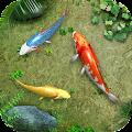 Water Koi Fish Pond LWP