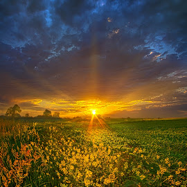 Mere Moments by Phil Koch - Landscapes Prairies, Meadows & Fields ( vertical, farmland, yellow, leaves, love, sky, nature, tree, weather, perspective, flowers, light, wild, orange, twilight, art, agriculture, horizon, portrait, dawn, season, serene, trees, lines, earthenvironment, hope, inspirational, natural light, wisconsin, ray, joy, country living, beauty, landscape, phil koch, spring, sun, photography, farm, life, country life, horizons, inspired, clouds, office, purple, park, heaven, beautiful, scenic, morning, shadows, field, red, blue, sunset, amber, peace, meadow, summer, beam, sunrise, garden )
