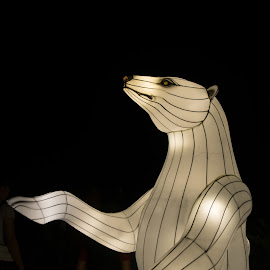 Stand Up Guy by Susan Myers - Artistic Objects Other Objects ( chinese lanterns, nighttime, daniel stowe, charlotte, object, polar bear )