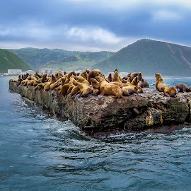 Sakhalin Island by Sergey Sibirtsev - Landscapes Waterscapes ( view from the boat, russia, sea lion, sakhalin, sea,  )