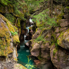 Avalanche Gorge by Walter Hsiao - Landscapes Waterscapes ( stream, trail of the cedars, avalanche gorge, montana, moss, river, glacier national park )